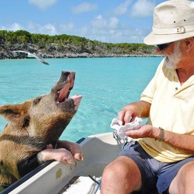 PX USA, Bahamas